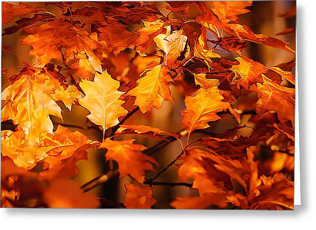 Autumn Prints Greeting Cards - Autumn Leaves Greeting Card by Steve Harrington
