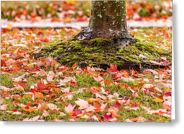 Bathroom Prints Greeting Cards - Autumn Leaves  Greeting Card by Terry DeLuco