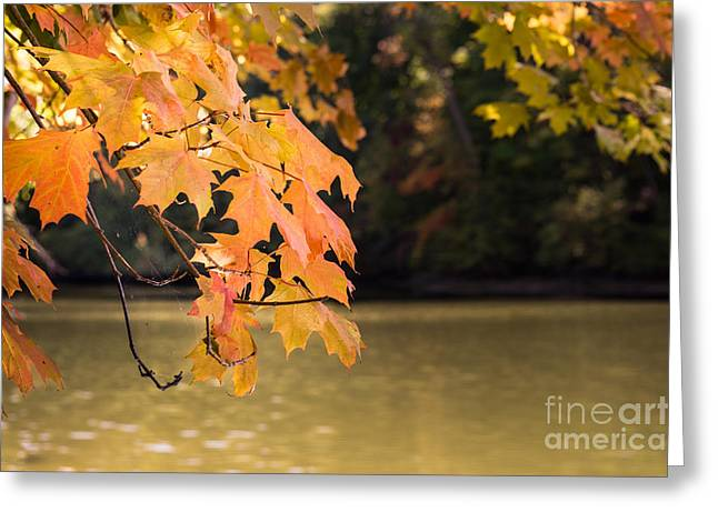 Indiana Autumn Greeting Cards - Autumn Leaves Greeting Card by The Noeto