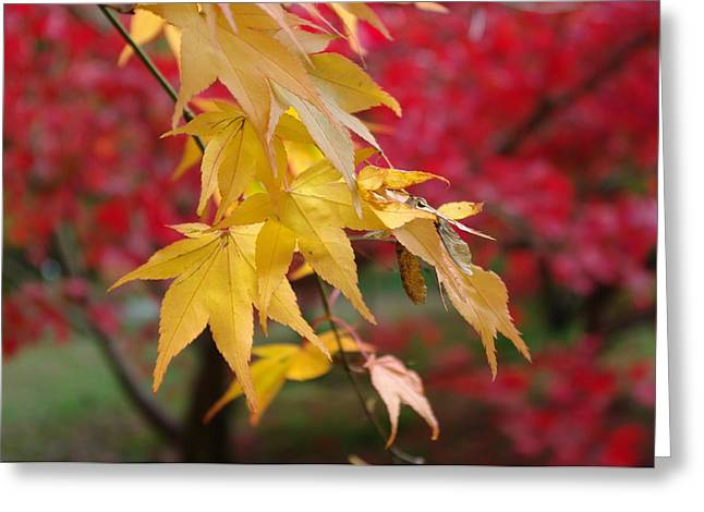 Red And Gold Leaves Greeting Cards - Autumn Leaves Greeting Card by Tony Serzin