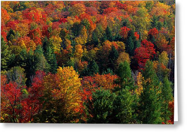 Pine Green Greeting Cards - Autumn Leaves Vermont Usa Greeting Card by Panoramic Images