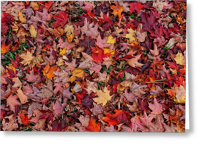Life Change Greeting Cards - Autumn Leaves Greeting Card by William Jobes