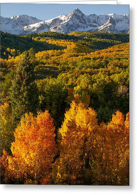 Photos With Red Photographs Greeting Cards - Autumn Light Greeting Card by Aaron Spong