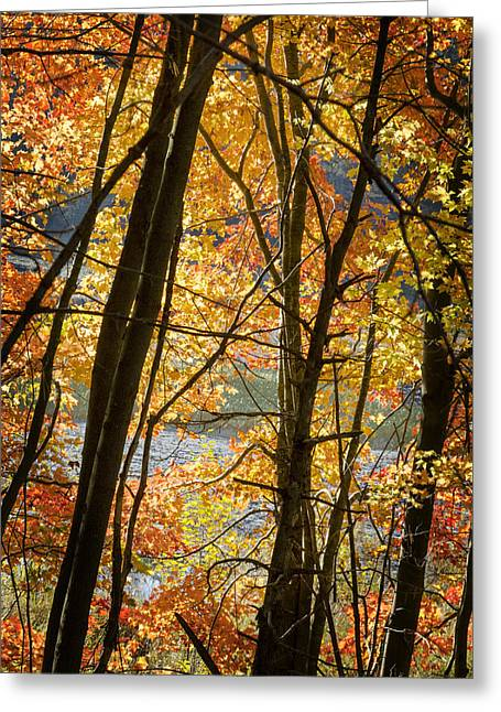 Barbara Smith Greeting Cards - Autumn Light Greeting Card by Barbara Smith