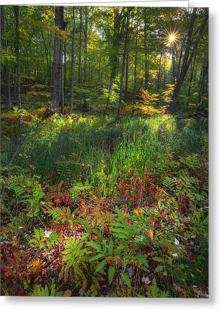 The Stars Greeting Cards - Autumn Light Greeting Card by Bill  Wakeley