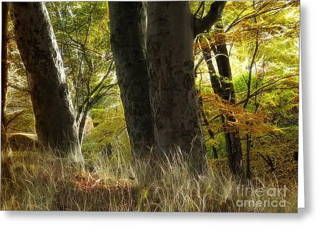 Autumn Art Greeting Cards - Autumn Light Greeting Card by Lutz Baar