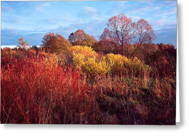 Lugs Greeting Cards - Autumn Light Greeting Card by Romeo Koitmae