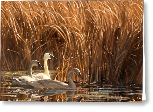 Swans... Digital Art Greeting Cards - Autumn Light- Trumpeter Swans Greeting Card by Aaron Blaise