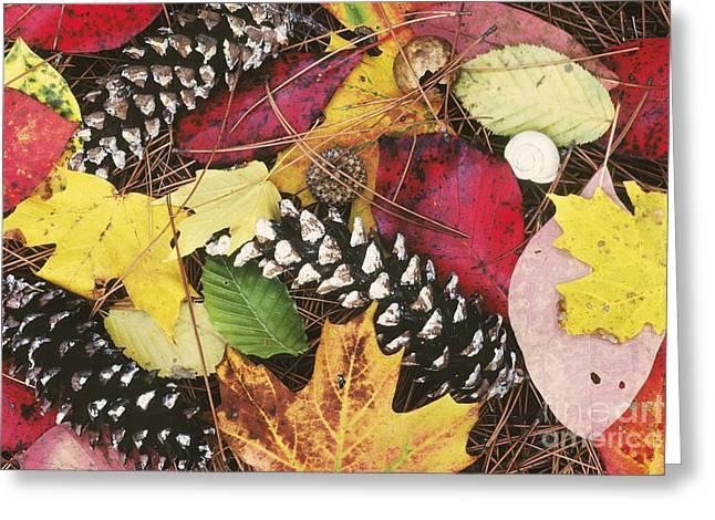 Pine Needles Greeting Cards - Autumn Litter Greeting Card by David Davis