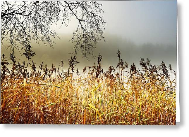 Autumn Prints Greeting Cards - Autumn Loch Ard  Greeting Card by Grant Glendinning