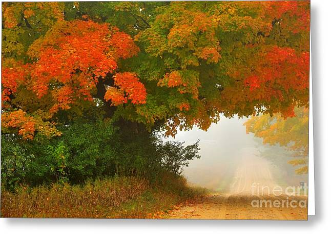 Autumn Trees Greeting Cards - Autumn Luminaire 9 Greeting Card by Terri Gostola