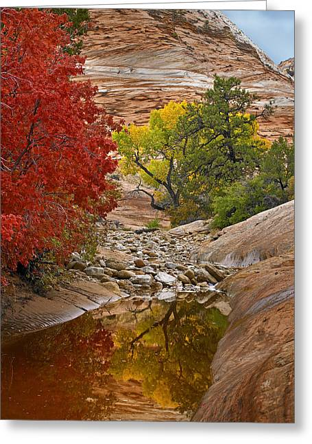 Photos Of Autumn Greeting Cards - Autumn Maple And Cottonwood Zion Greeting Card by Tim Fitzharris