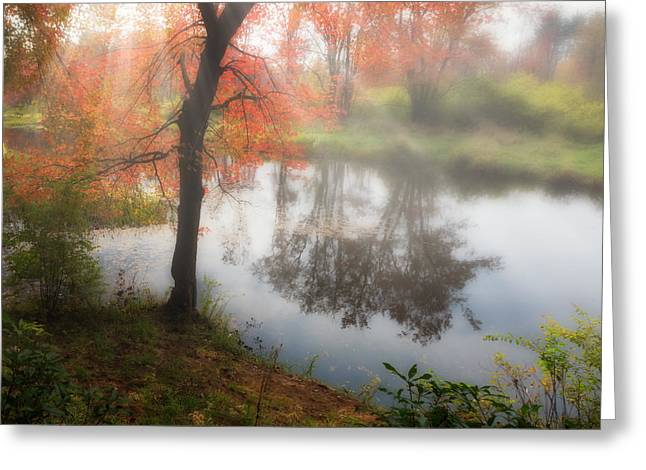 Reflections Of Trees In River Photographs Greeting Cards - Autumn Maple Tree Greeting Card by Bill  Wakeley