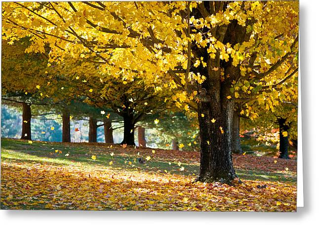 Blurred Greeting Cards - Autumn Maple Tree Fall Foliage - Wonderland Greeting Card by Dave Allen