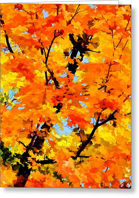 Downeast Greeting Cards - Autumn Maple Turning Greeting Card by Bill Caldwell -        ABeautifulSky Photography