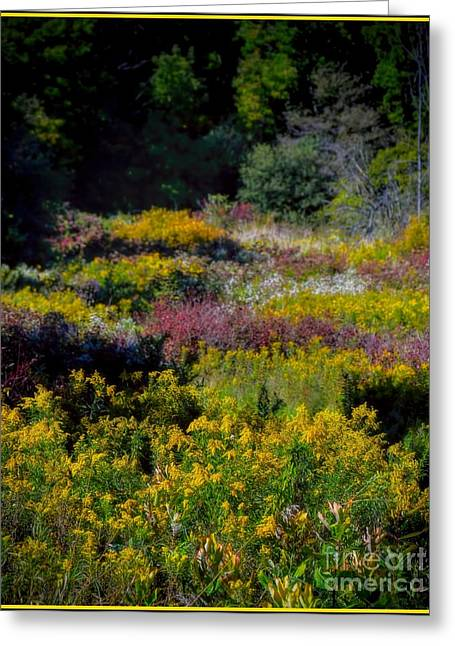 A Summer Evening Greeting Cards - Autumn - Meadow Wildflowers Greeting Card by Henry Kowalski