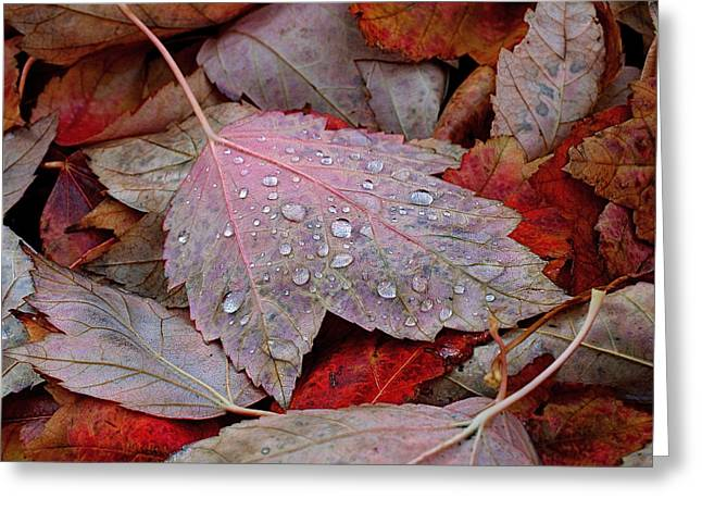 Botanical Photographs Greeting Cards - Autumn Melange Greeting Card by Rona Black
