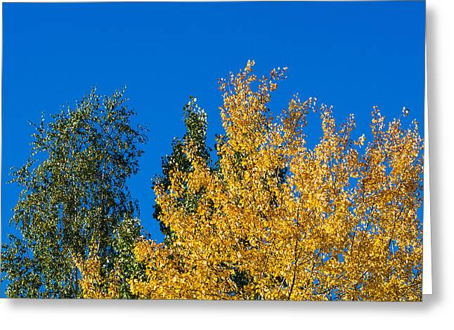 Autumn Mix 2 - Featured 3 Greeting Card by Alexander Senin