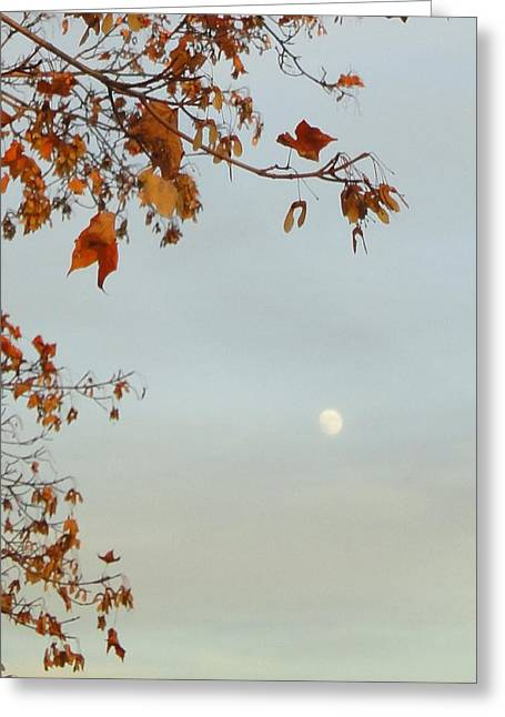 Guy Ricketts Photography Greeting Cards - Autumn Moon Greeting Card by Guy Ricketts