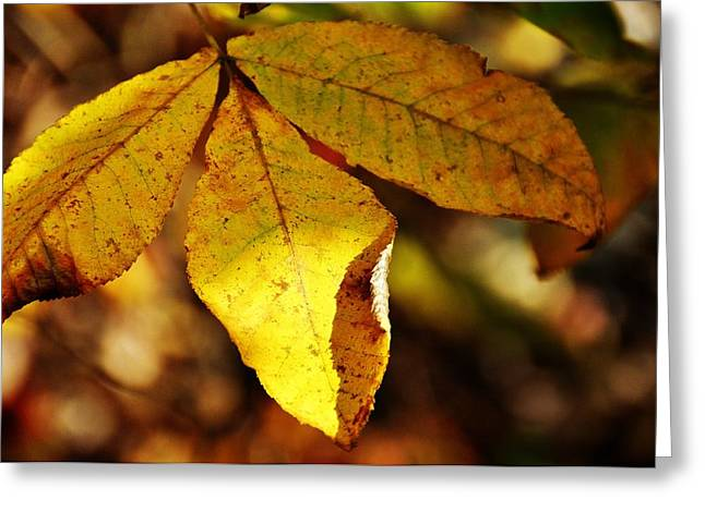 Red Fallen Leave Photographs Greeting Cards - Autumn Moon Greeting Card by JAMART Photography