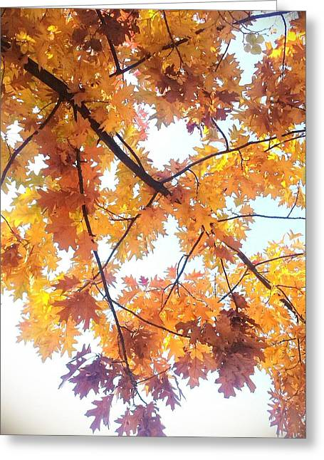 Poland Greeting Cards - Autumn Greeting Card by Nathalie Hope