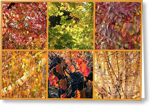 Grape Leaf Greeting Cards - Autumn Nature Collage Greeting Card by Carol Groenen