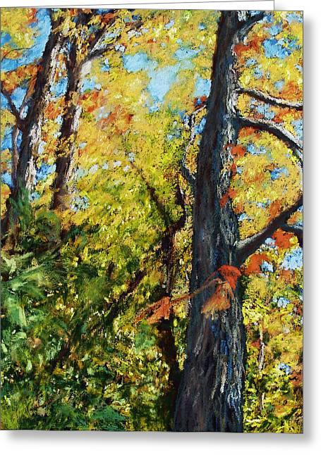 Acrylic Print Greeting Cards - Autumn Oaks Greeting Card by Abbie Groves