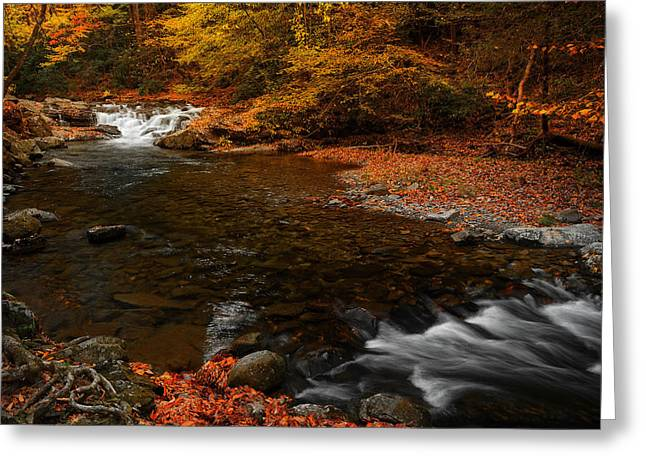 Tennessee River Greeting Cards - Autumn on Laurel Creek Greeting Card by Johan Hakansson