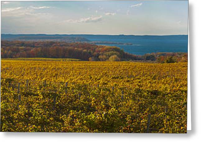 Wine Tour Greeting Cards - Autumn On Old Mission Peninsula Panoramic Greeting Card by Owen Weber