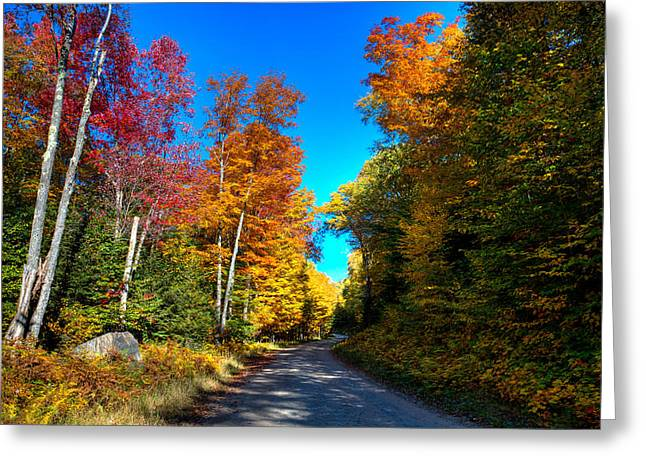 Fir Trees Greeting Cards - Autumn on South Rondaxe Road Greeting Card by David Patterson