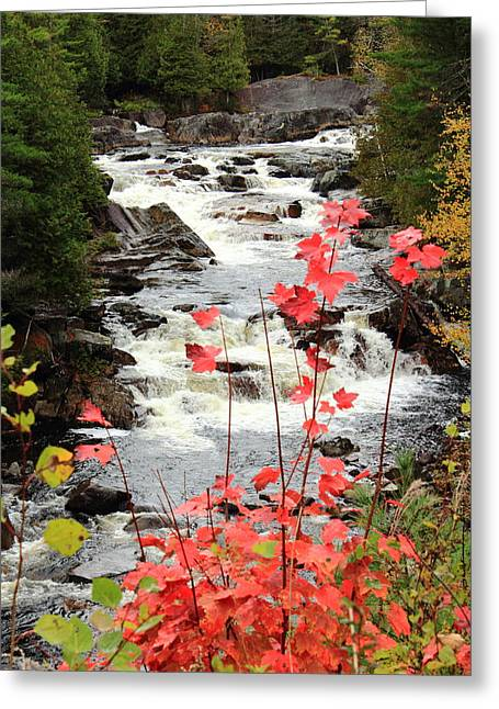 Lake Paradox Greeting Cards - Autumn on the Branch Greeting Card by Stephen Hobbs