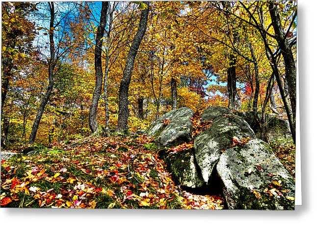 Fir Trees Greeting Cards - Autumn on the Rocks Greeting Card by David Patterson
