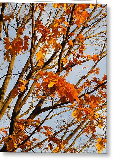 Photos Of Autumn Greeting Cards - Autumn Orange Greeting Card by Guy Ricketts