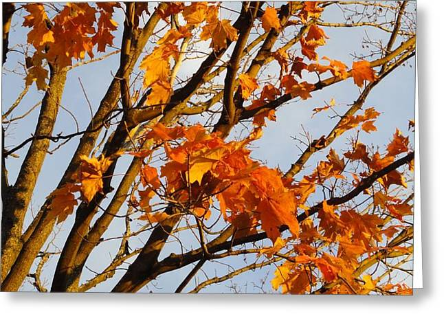 Autumn Orange Greeting Card by Guy Ricketts