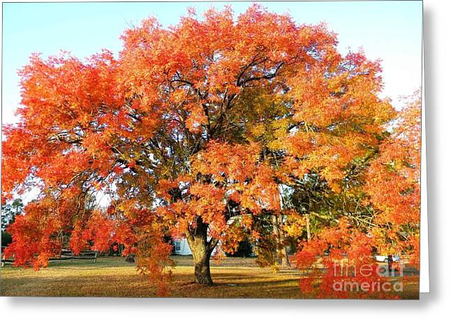 Window Of Life Greeting Cards - Autumn Orange Greeting Card by Matthew Seufer