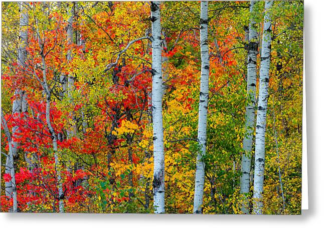 Bridge Greeting Cards Greeting Cards - Autumn Palette Greeting Card by Mary Amerman