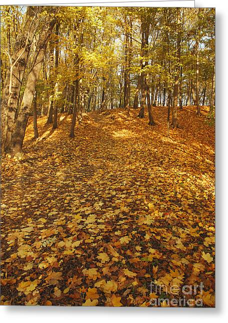 Hdri Greeting Cards - Autumn park Greeting Card by Aleksey Tugolukov