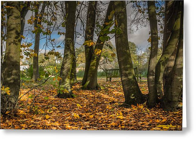 """""""shadow Trees"""" Greeting Cards - Autumn parkland Greeting Card by Chris Fletcher"""