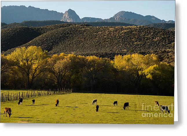 Geobob Greeting Cards - Autumn pastures along the Virgin River Rockville Utah Greeting Card by Robert Ford