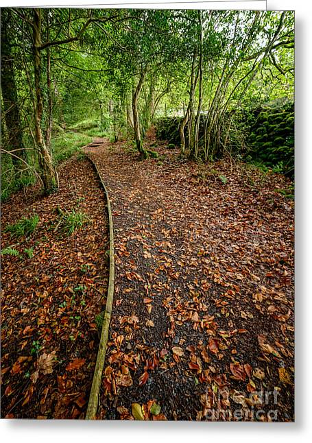Moss Greeting Cards - Autumn Path Greeting Card by Adrian Evans