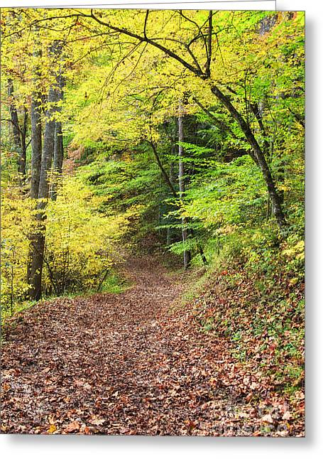 Mountain Road Greeting Cards - Autumn Path in the Woods Greeting Card by Jill Lang