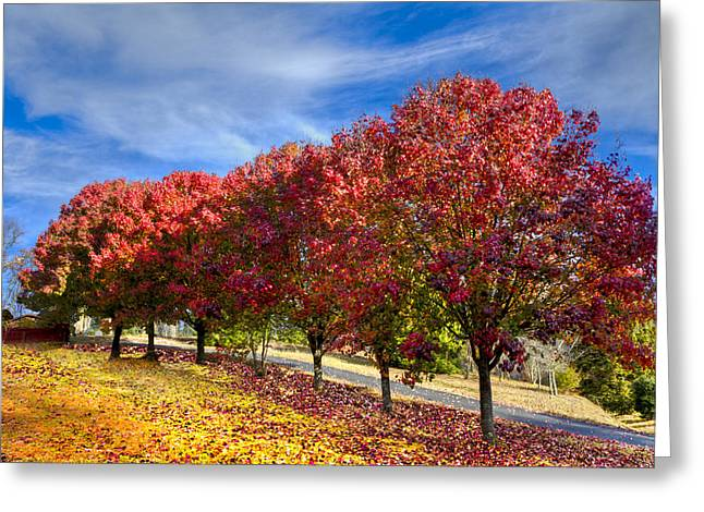 Tennessee Barn Greeting Cards - Autumn Pear Trees Greeting Card by Debra and Dave Vanderlaan