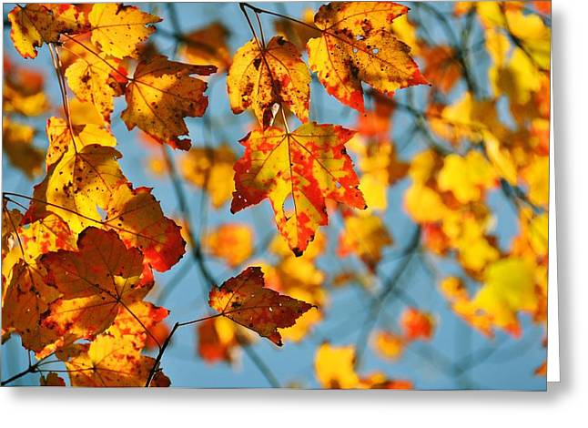 Red Fallen Leave Greeting Cards - Autumn Petals Greeting Card by JAMART Photography