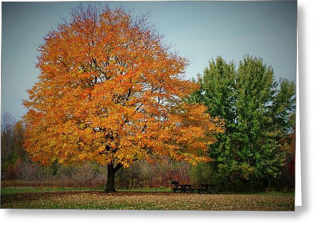 Indiana Autumn Greeting Cards - Autumn Picnic Site - Potato Creek State Park Greeting Card by Rory Cubel