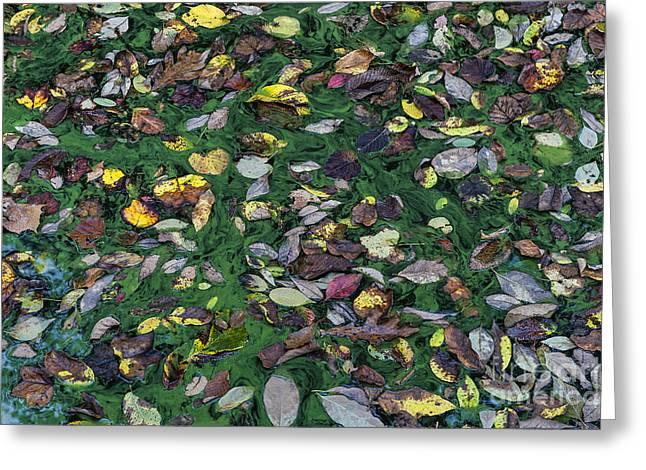 Alga Greeting Cards - Autumn Pond Greeting Card by John Greim