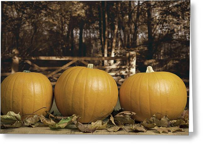 Pumpkins Greeting Cards - Autumn Pumpkins Greeting Card by Amanda And Christopher Elwell