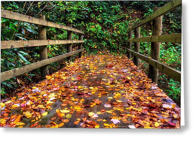 Slickrock Greeting Cards - Autumn Rain at Joyce Kilmer Memorial Forest Greeting Card by Greg Mimbs