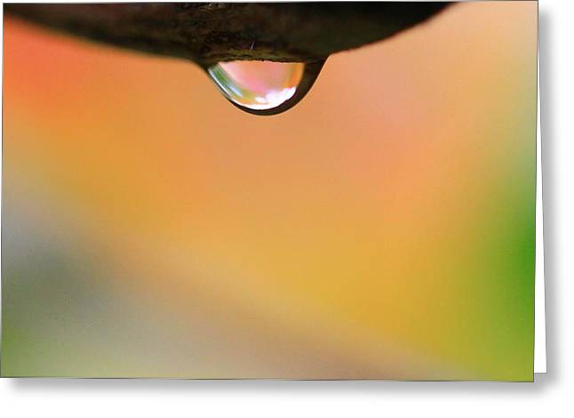 Forecast Greeting Cards - Autumn Raindrop Greeting Card by Dan Sproul