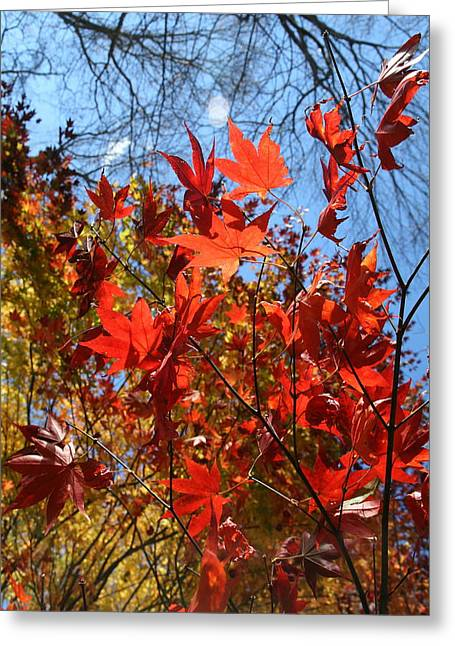 Neal Eslinger Photography Greeting Cards - Autumn Reach  Greeting Card by Neal  Eslinger