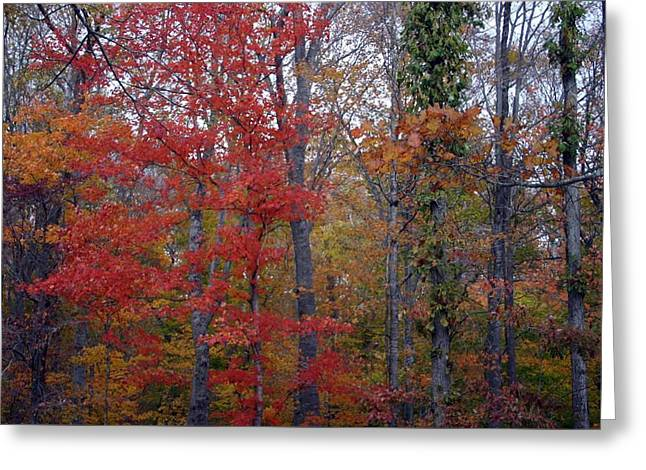 Lake Tapestries - Textiles Greeting Cards - Autumn Red in Kentucky Greeting Card by Thia Stover